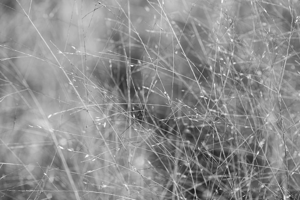 Black and white landscape photograph of tiny stems and blades of grass blowing in the breeze of an open field. The subject is so ethereal, the composition almost feels like an abstraction.