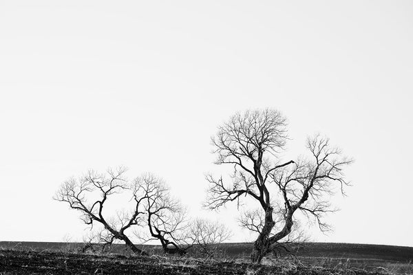 Black and white landscape photograph featuring gnarly and barren black trees on the vast and empty American prairie.