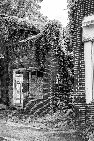 Black and white photograph of ruined buildings being consumed by ivy on the old abandoned main street of a ghost town.