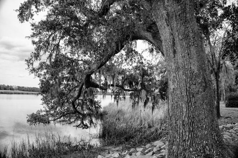 Black and white landscape photograph of a giant, old tree on the bank of the Ashley River in the Low Country near Charleston, South Carolina. This tree is on the property of Drayton Hall.