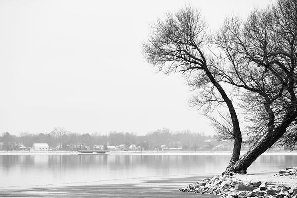 Black and white landscape photograph of windblown black tree on a rocky promontory beside a wintery lake.