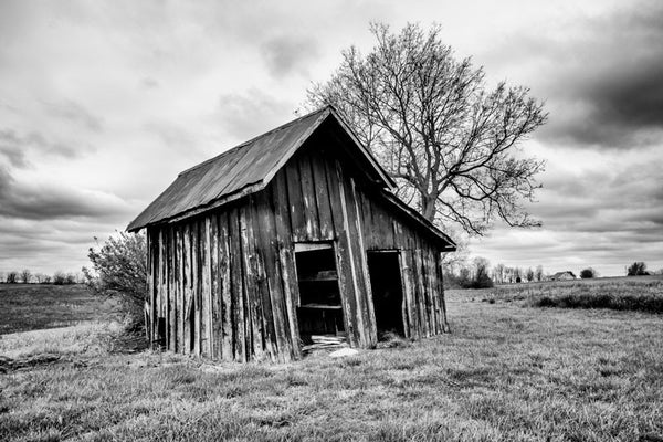 Black and white landscape photograph featuring an old wooden shed, leaning back toward a big tree.
