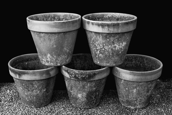 Highly-detailed black and white photograph of five stacked terra cotta flower pots covered in moss and lichens.