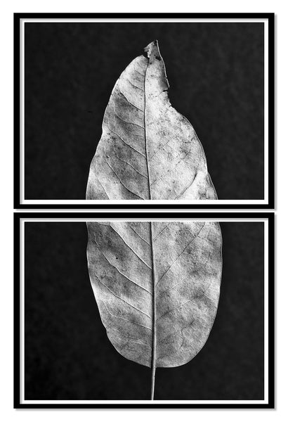 Leaf Detail Set of Two Stacked Black and White Photographs (DSC01393)