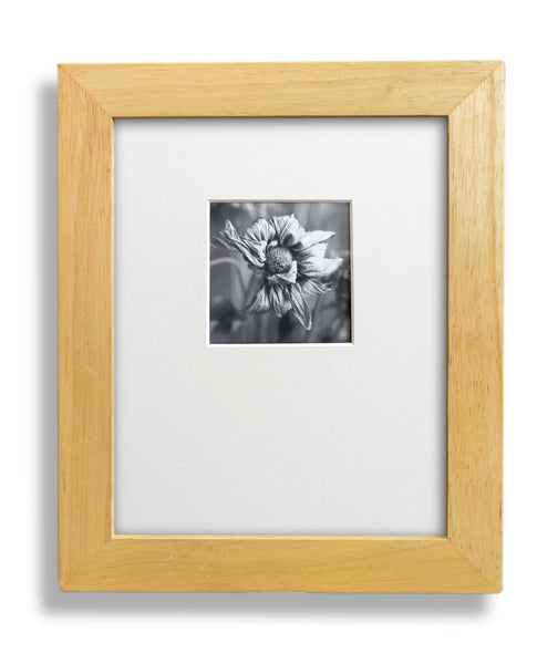 'Dead Flower' Limited Edition Gelatin Silver Photograph