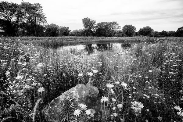 Black and white photograph of the beautiful landscape of the northern prairie featuring a pond surrounded by acres of wildflowers.