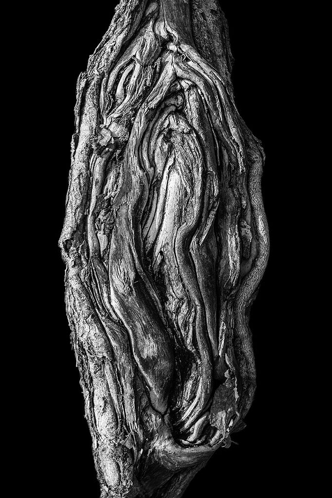 Black and white detail photograph of a beautifully gnarly tree root, isolated on a black background for a more simple and graphic effect.