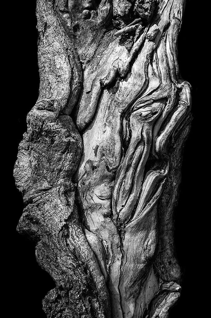 Black and white detail photograph of a beautifully twisted tree root, pictured on a black background for a more simple and bold effect.