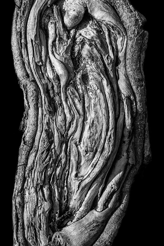 Black and white detail photograph of a beautifully textured tree root, pictured on a black background for a more simple and bold effect. Part of an optional set of three.