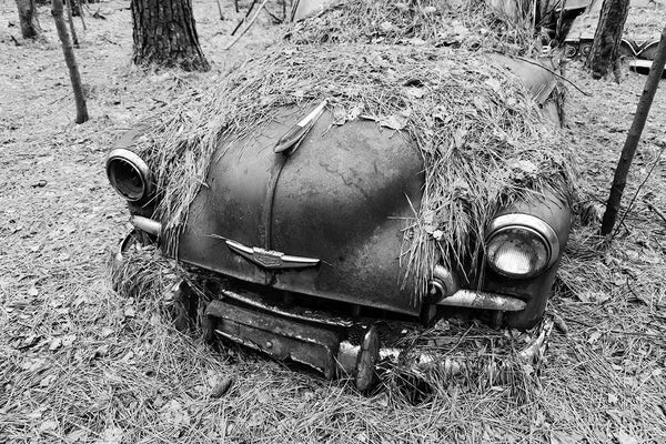 Black and white photograph of a classic antique American car abandoned in the southern woods, slowly being covered by pine needles.