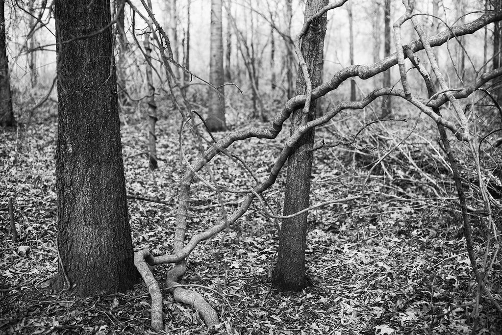 Black and white landscape photograph of a dark and moody woodland scene with two thick vines reaching across trees.