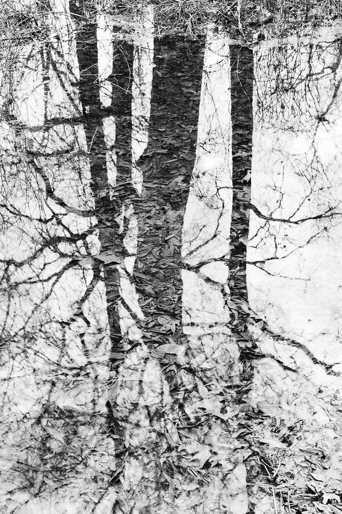 Black and white landscape photograph of trees reflecting onto a wetland pond with submerged leaves visible below the water's surface