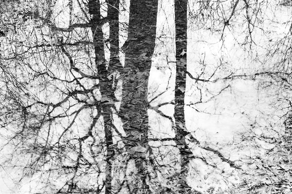 Black and white landscape photograph of tree shadows reflecting on wetlands allowing submerged leaves to become visible