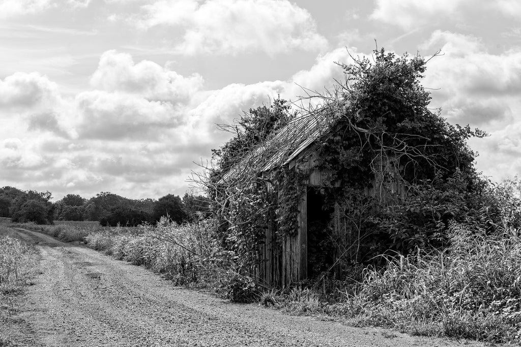 Black and white photograph of a rural landscape with an overgrown wooden shed.