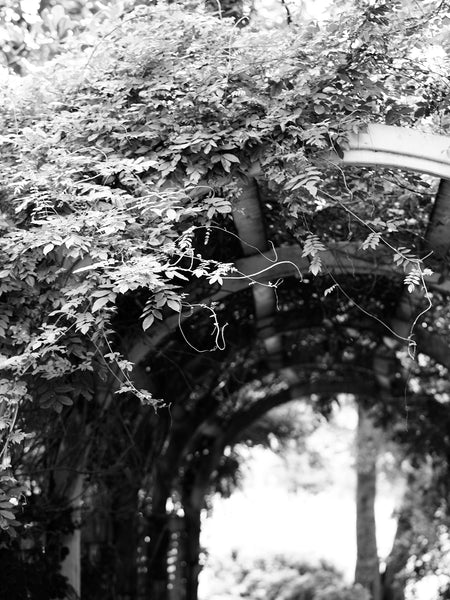 Black and white photograph of an archway covered in ivy vines.