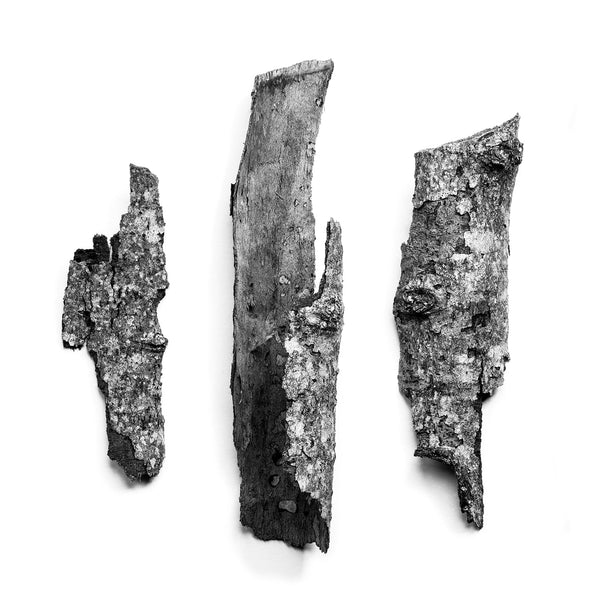 Black and white detail photograph of three fragments of textured tree bark arranged on a white background.
