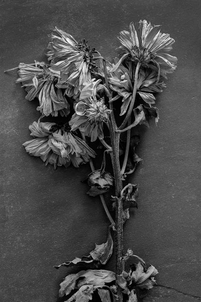 Black and white photograph of an old bouquet of yellow flowers that is still beautiful in its decline.