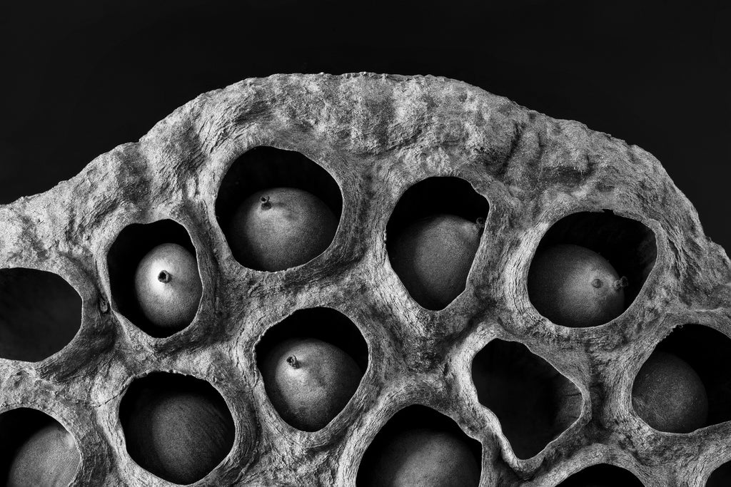 Black and white photograph of the organic shape of a lotus seed pod filled with seeds.
