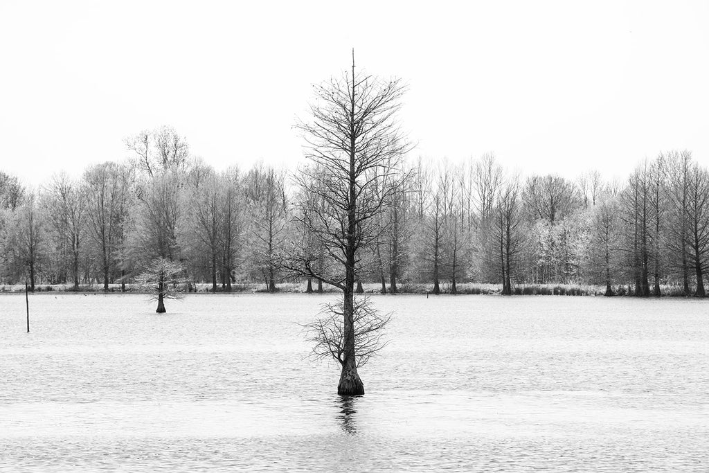 Black and white landscape photograph of a cypress tree growing in the center of a sunlit lake.