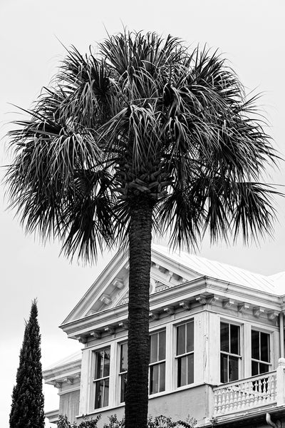 Black and white photograph of a South Carolina palm tree with a beautiful, historic old house in Charleston behind it.