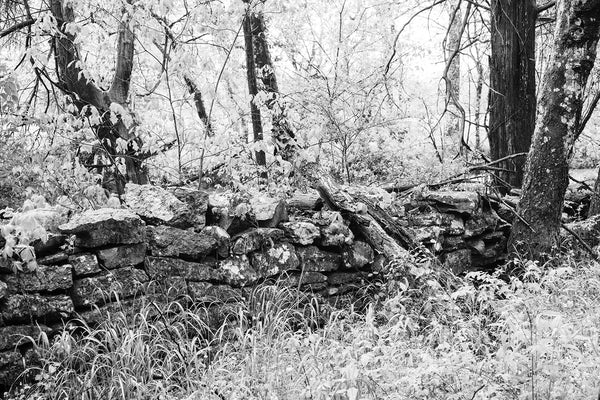 Black and white landscape photograph of an old stone wall in the woods.