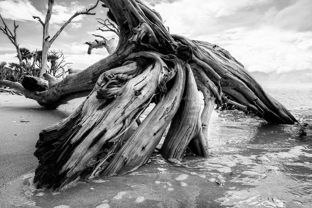 Black and white photograph of the roots of a driftwood tree laying on the beach.