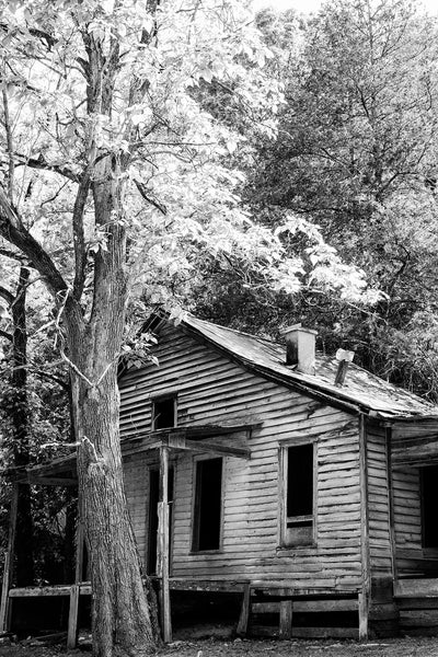 Black and white photograph of a giant tree catching the last rays of sunlight over the tin roof of an abandoned old house