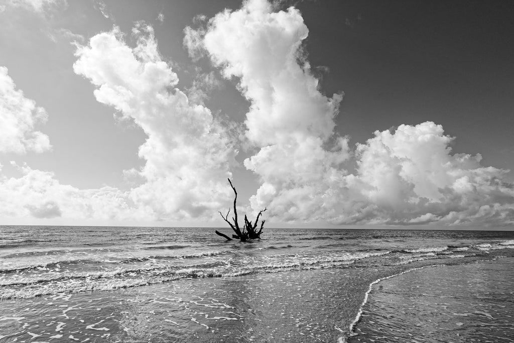 Black and white photograph of a driftwood tree in the ocean waves looks like the tentacles of a sea monster.