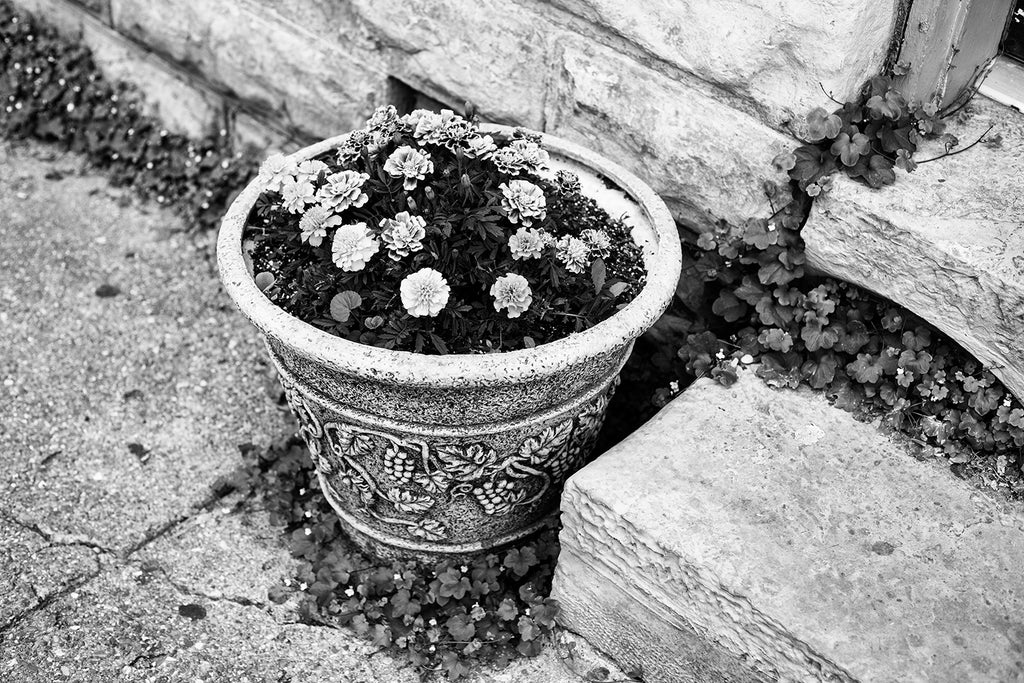 Black and white detail photograph of a potted plant on a small town sidewalk surrounded by wild plants growing through the cracks and boundaries