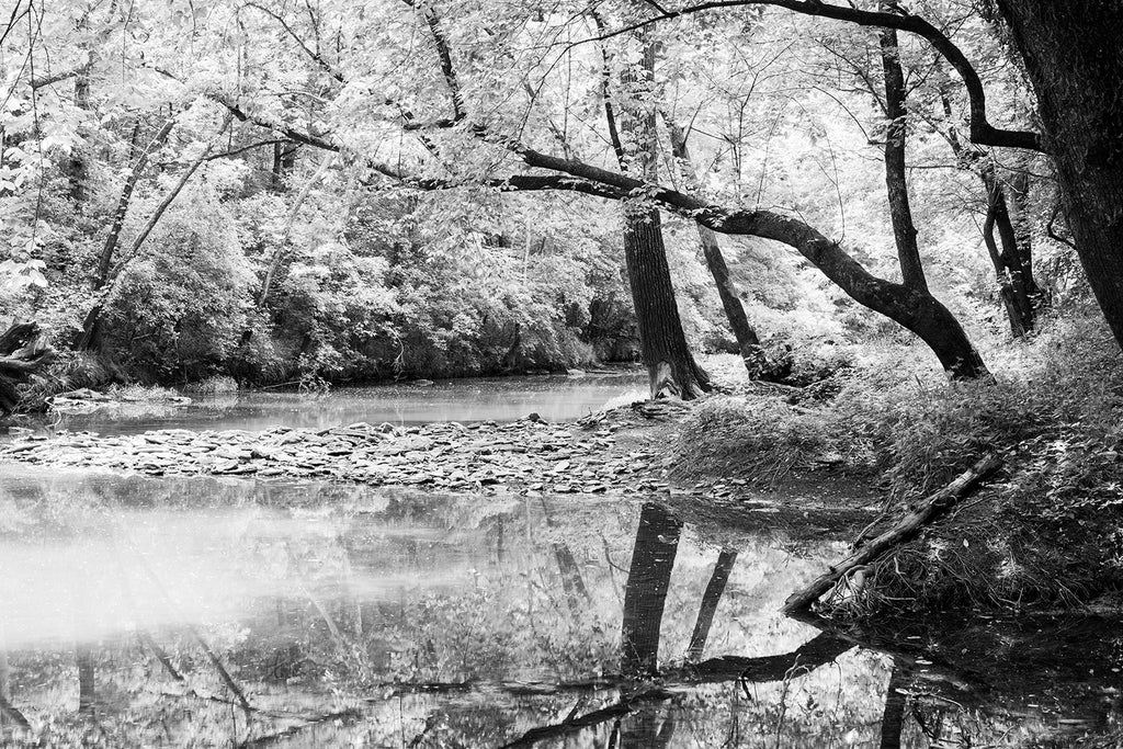Black and white photograph of black trees reflecting in a languid stream with summer sunlight shining through the leaves