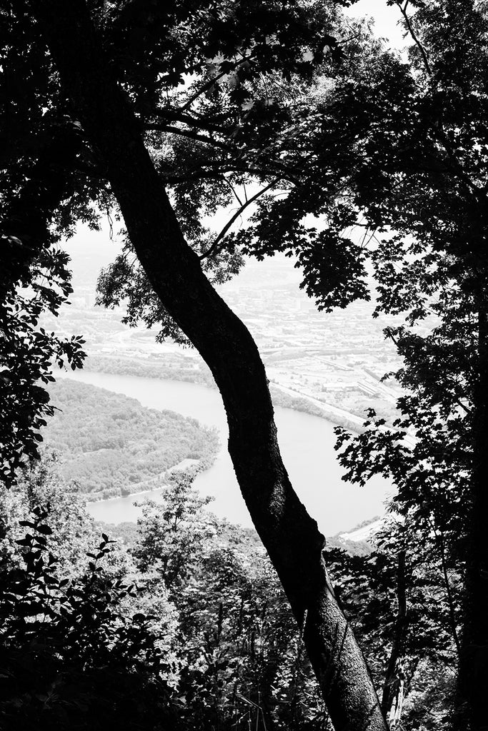 Black and white landscape photograph of a tree on Lookout Mountain overlooking Moccasin Bend in Chattanooga, Tennessee.