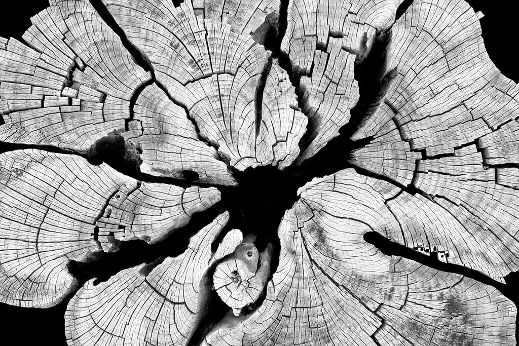 Black and white detail photograph of abstract lines and patterns inside a cracked and weathered cedar tree stump