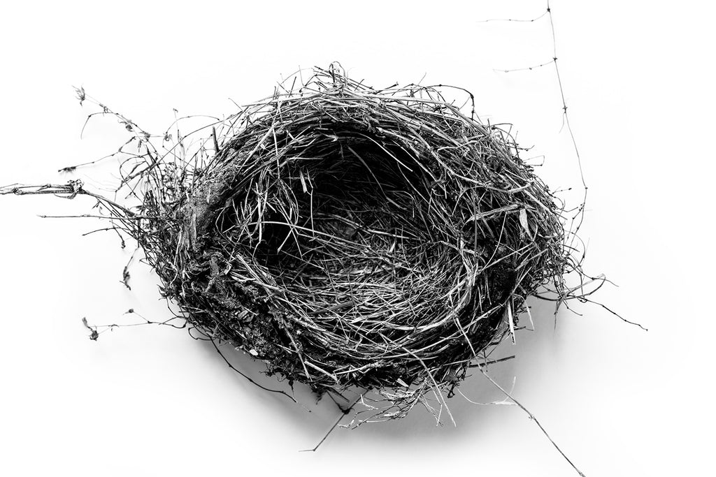 Highly detailed black and white fine art photograph of a beautiful bird nest on a simple white background.