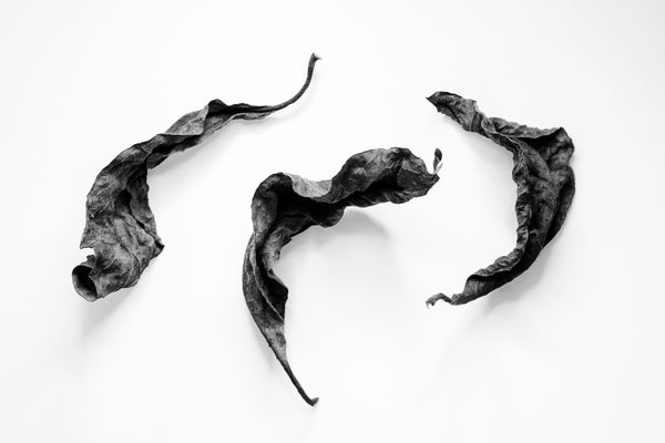 Black and white fine art photograph of three dried leaves arranged in what looks like a joyous dance.