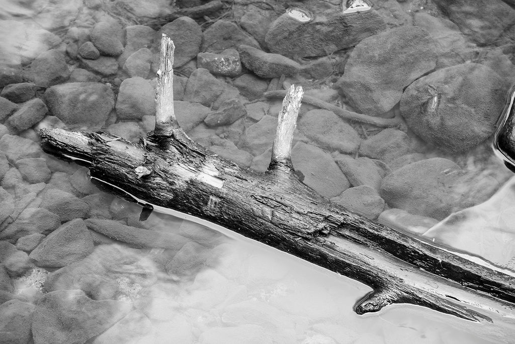 Black and white photograph of a fallen tree floating like driftwood in a natural rocky pool.