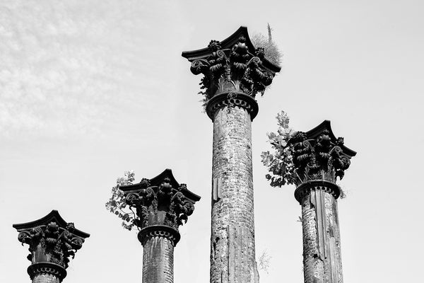 Black and white photograph of four columns still standing at the long-gone plantation house known as the Windsor Ruins.