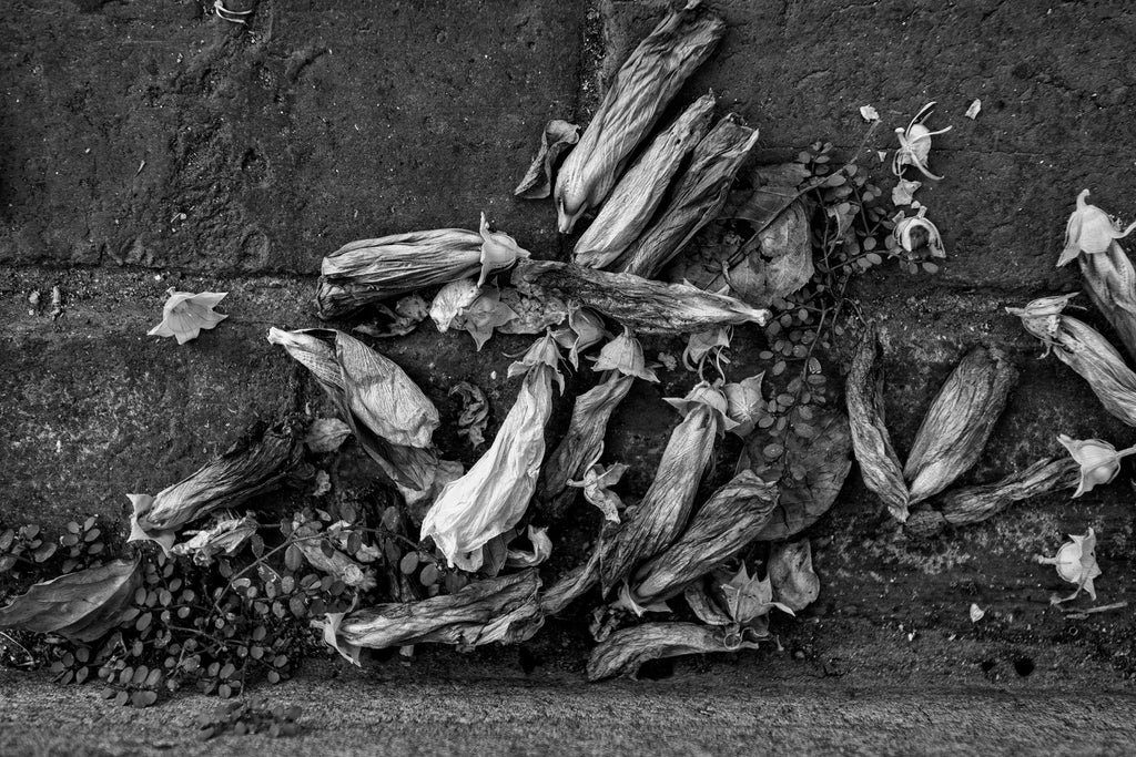 Black and white photograph of a collection of flower blossoms that have fallen into the gutter along a city street.
