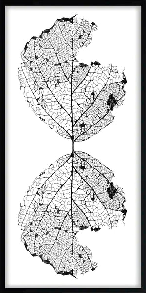 Black and white photograph of a barren leaf skeleton reflected vertically to create a graphic stylized wireframe image