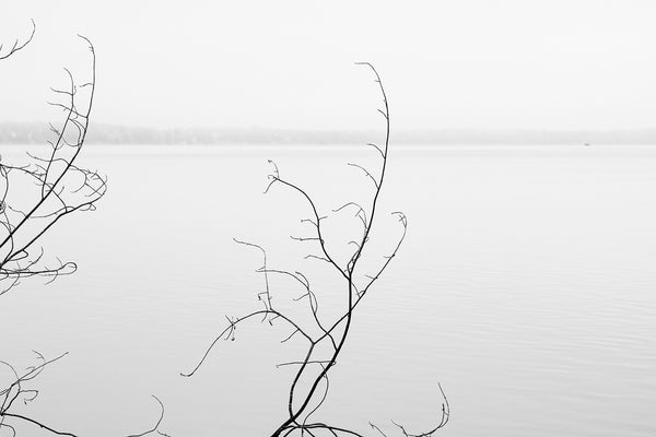 Minimalist black and white landscape photograph of a barren tree branches composed against an empty foggy lake.