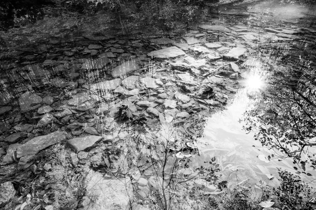 Placid Stream Reflection: Black and White Photograph (DSC06329)