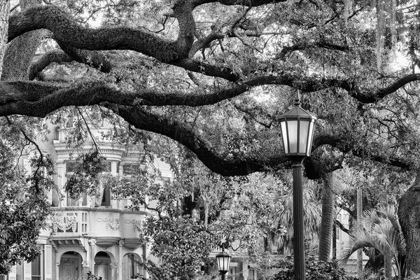Black and white photograph of a big oak tree branch and a street lamp in Monterey Square in Savannah Georgia