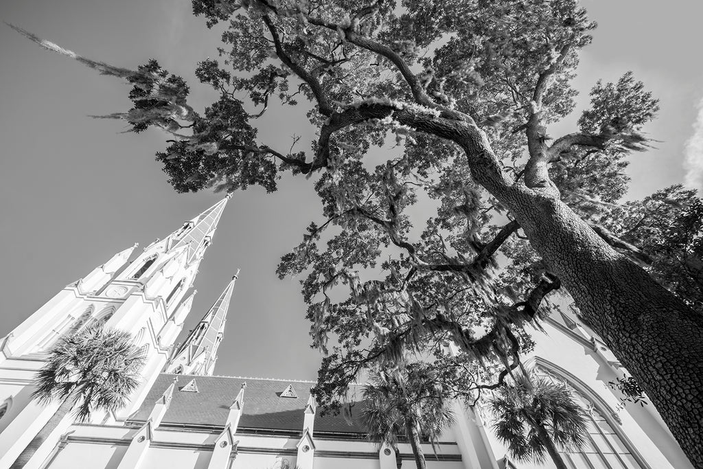 Savannah Cathedral Tree - Black and White Photograph (DSC06705)