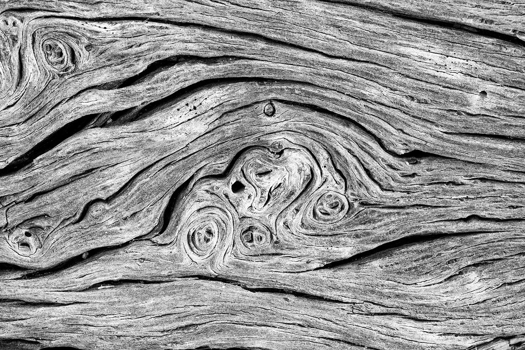 Highly detailed black and white abstract photograph of twisting and spiraling patterns found in a driftwood tree on the beach. Also available as a set of two companion photographs.