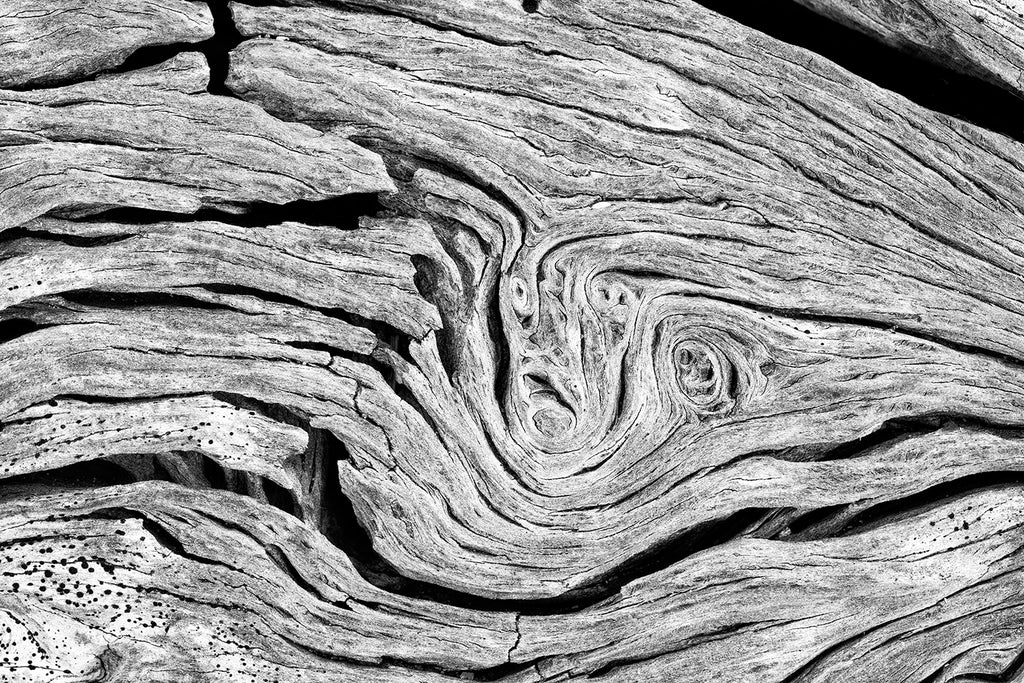 Highly detailed black and white abstract photograph of twisting and spiraling patterns found in a driftwood tree on the beach. Also available as a set of two companion photographs here.
