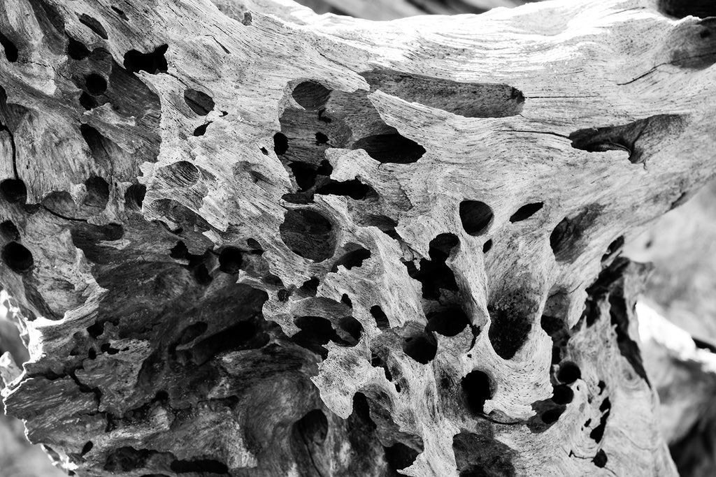 Black and white detail photograph of a piece of driftwood riddled with holes created by ship-eating sea mollusks.