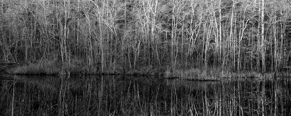Black and white panoramic photograph of a early morning sunshine reflecting from barren winter trees onto a glassy pond.