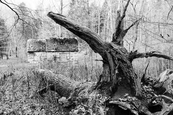 Black and white photograph an abandoned stone hut in the forest framed by the curved branch of a fallen tree.