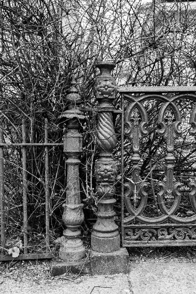 Black and white photograph of two beautifully rusty old Victorian iron fence posts amidst unkempt hedges.