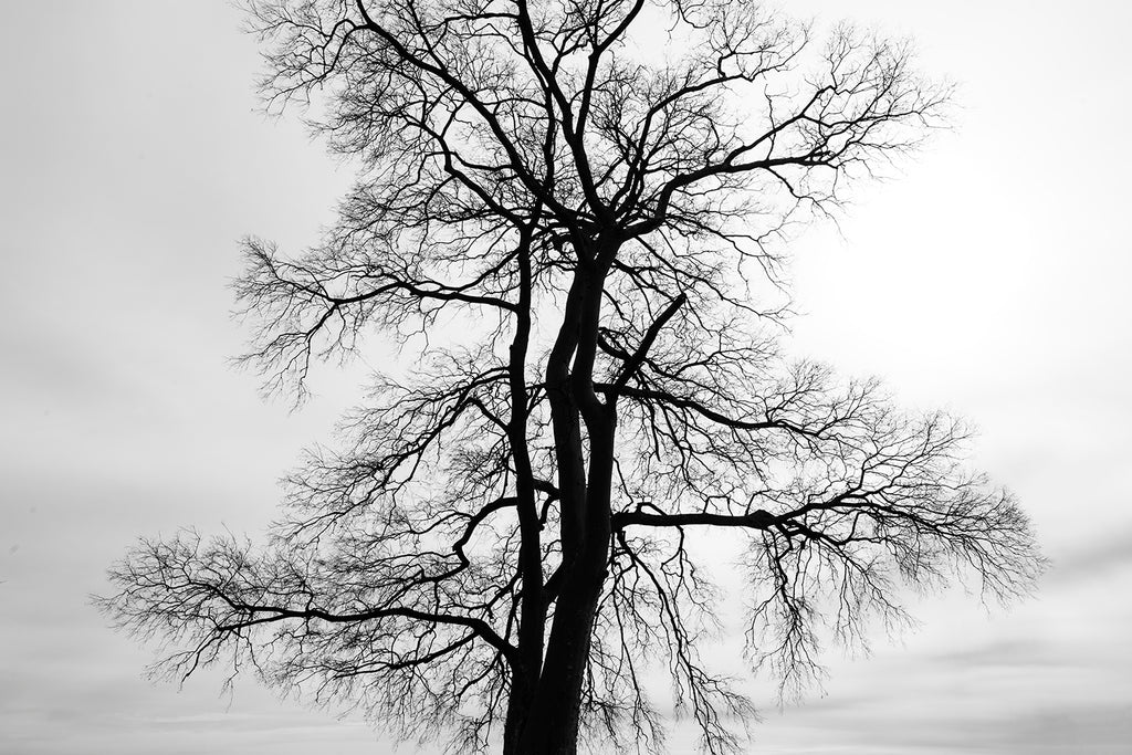 Black and white landscape photograph of a barren black tree silhouetted against a cloudy winter sky.