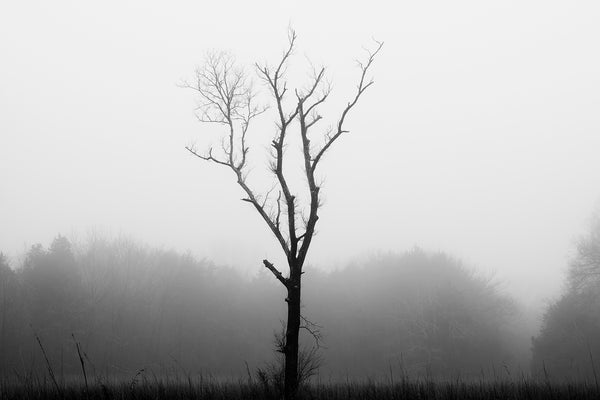 Black and white landscape photograph of a beautifully gloomy foggy day featuring a tree in the middle of a grassy pasture.
